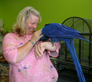 CUTE TALKING MACAW PARROTS AVAILABLE FOR ADOPTION